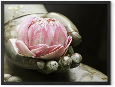 pink lotus in hand of buddha Framed Poster