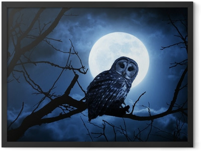 Owl Watches Intently Illuminated By Full Moon On Halloween Night Framed Poster