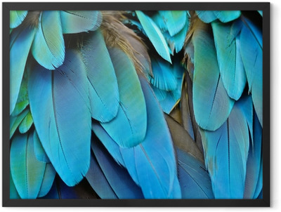 Harlequin Macaw feathers Framed Poster