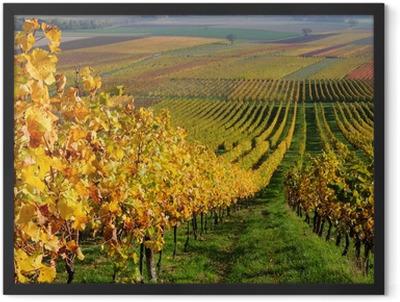 Autumn vineyard landscape in Rhine Valley, Germany Framed Poster