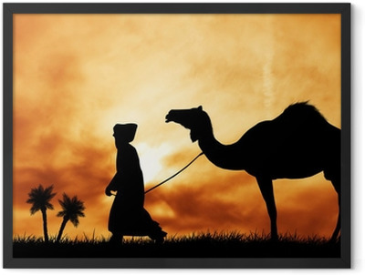 camel in the desert Framed Poster