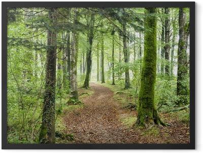 Woodland Path Framed Poster