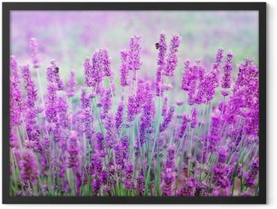 Lavender Framed Poster