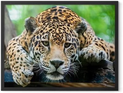 South American jaguar Framed Poster
