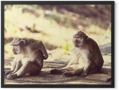 Monkey Framed Poster
