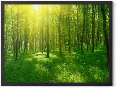 Sunlight in the green forest Framed Poster