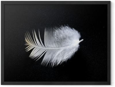 white feather Framed Poster