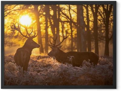 Red deer Framed Poster