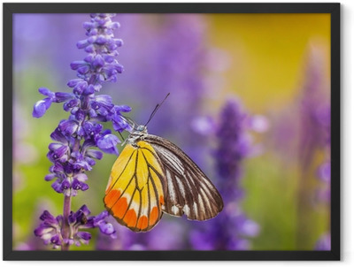 Insects and Flowers Framed Poster