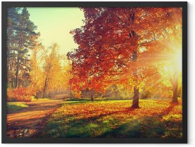 Trees in the autumn sun light Framed Poster