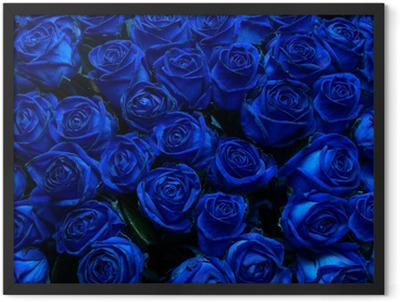 blue roses Framed Poster