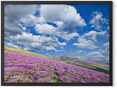 Colorful hill slope covered by violet heather flowers Framed Poster