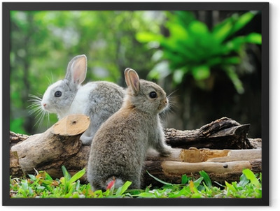 Two rabbits bunny in the garden Framed Poster