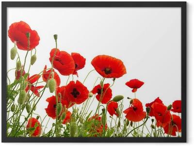 red poppy Framed Poster