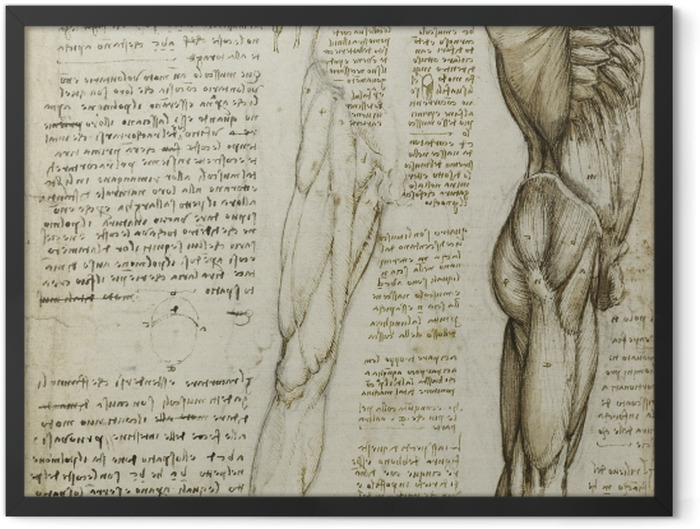Gerahmtes Poster Leonardo da Vinci - Anatomische Studie - Reproduktion