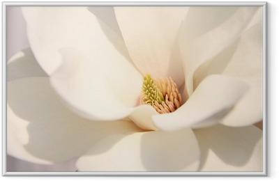White magnolia flowers Framed Poster