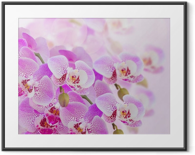 pink orchid branch close up Framed Poster