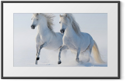 Two galloping snow-white horses Framed Poster