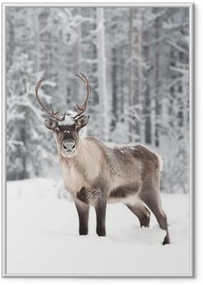 Dejtingsajter för hjort jägare