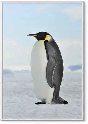 Emperor Penguin Framed Poster