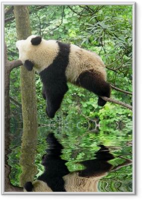 Poster en cadre Panda - Thèmes