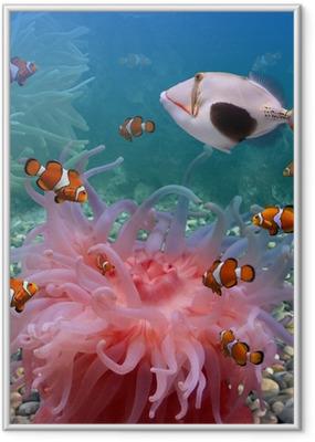 Gerahmtes Poster Tropische Fische