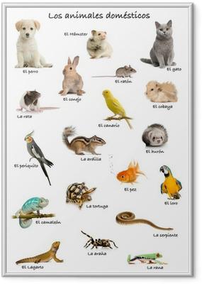 Gerahmtes Poster Collage von Tieren und Haustieren auf Spanisch