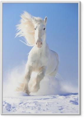 Hvid hestehest løber galop i frontfokus Indrammet plakat
