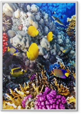 Gerahmtes Poster Korallen und Fische im Roten Meer, Ägypten