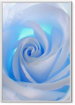 Poster en cadre Rose bleue