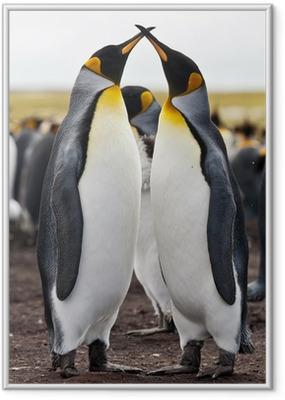 couple king penguins Framed Poster