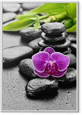 Plakat w ramie Orchidea