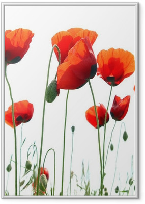 Poster en cadre Red poppies