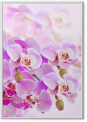 Gerahmtes Poster Rosa Orchidee Zweig close up