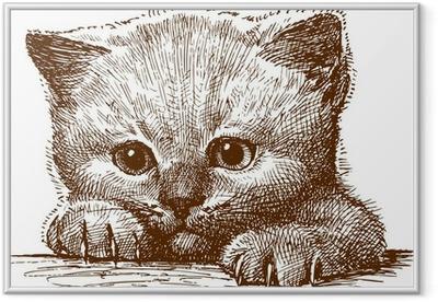 Kitten Framed Poster