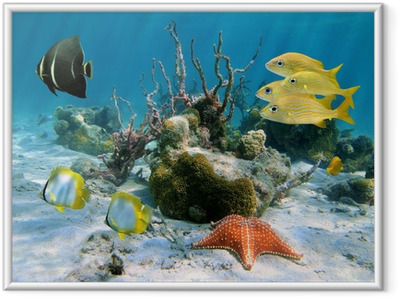 Fishes and sea star Framed Poster