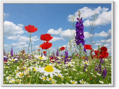 red poppy and wild flowers Framed Poster