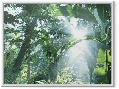 Poster en cadre Jungle