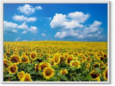 Gerahmtes Poster Sonneblumenfeld