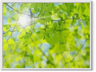 Gerahmtes Poster Green leaves