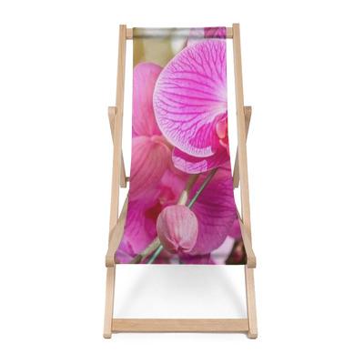 Strandstoel Orchideebloem in de tuin bij de winter of de lentedag voor prentbriefkaarschoonheid en het ontwerpconcept van het landbouwidee. orchideeën zijn exportproducten van Thailand die veel geld verdienen.