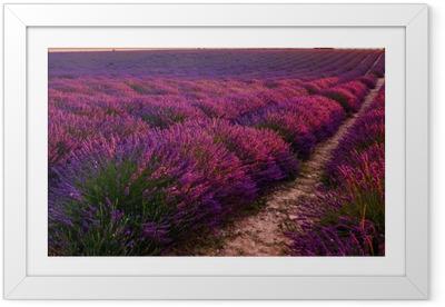Ingelijste Poster Lavendel veld op zonsopgang, Valensole plateau (Frankrijk)