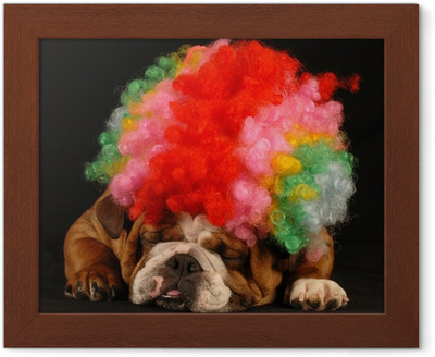 Fototapet Engelsk bulldog ignorerer kattunge leker med ball ved siden av  henne • Pixers® - Vi lever for forandring 049266dd4bd61
