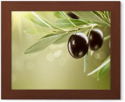 58d1868a4 emojination svar norsk level 7 Voksende oliven. Sort moden oliven på et tre
