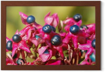 Japanischer Losbaum Clerodendrum Trichotomum Poster O PixersR We Live To Change