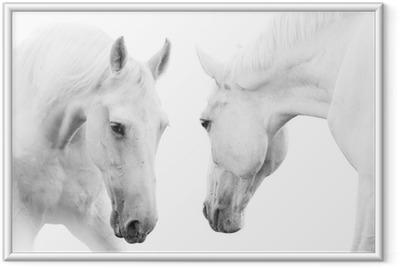 Plakat w ramie Białe konie