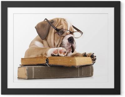 Gerahmtes Poster Reinrassige Englisch Bulldog in Gläsern und Buch