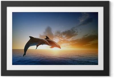 Delfiner hoppe Indrammet plakat
