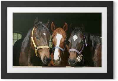 Nice thoroughbred foals in stable. Framed Poster