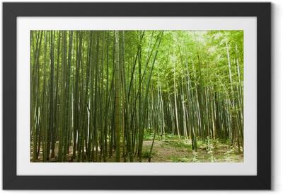 Poster en cadre Chemin de la forêt de bambou